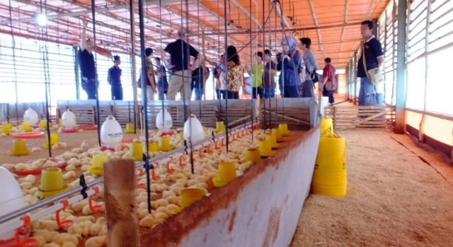 Assessing brooding conditions in newly equipped broiler house