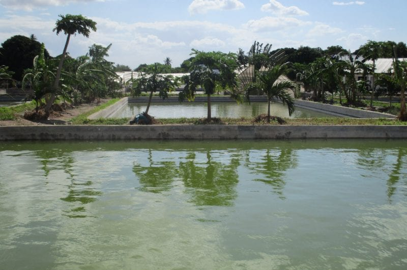 FoodTechAfrica Tanzania visiting potential farm