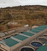 Kamuthanga tilapia-based fish farm in Machakos, Kenya